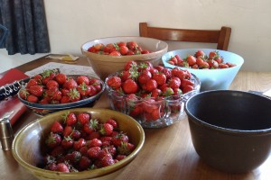 The summer strawberry mountain